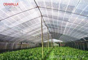 malla sombra para hortalizas