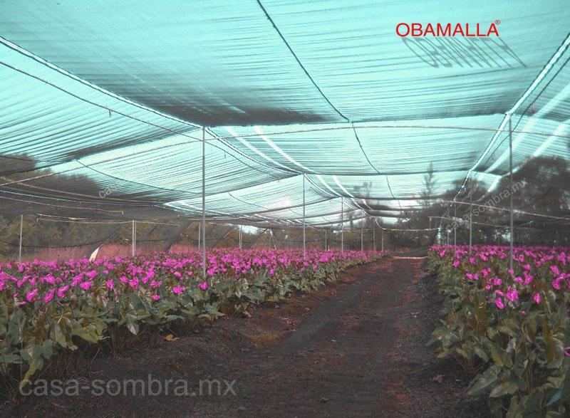 OBAMALLA casa sombra protege tus cultivos de flores