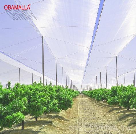 Casa Sombra en cultivos de frutos y cítricos