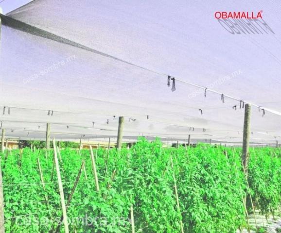 OBAMALLA casa sombra protección para cultivos de tomate