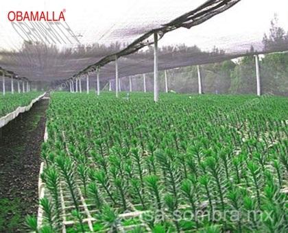 Ayude a reducir el estrés en tus cultivos con Casa Sombra OBAMALLA
