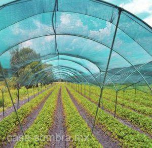 casa de sombreado en hortalizas