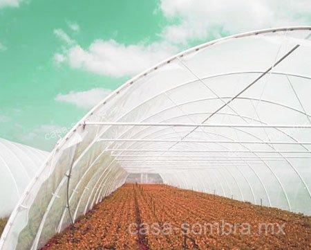 Protección de los rayos del sol en invernaderos con casa sombra